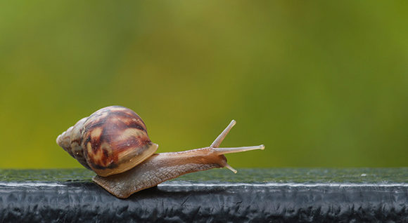 How To Configure Cloudflare CDN on WordPress Websites Easily